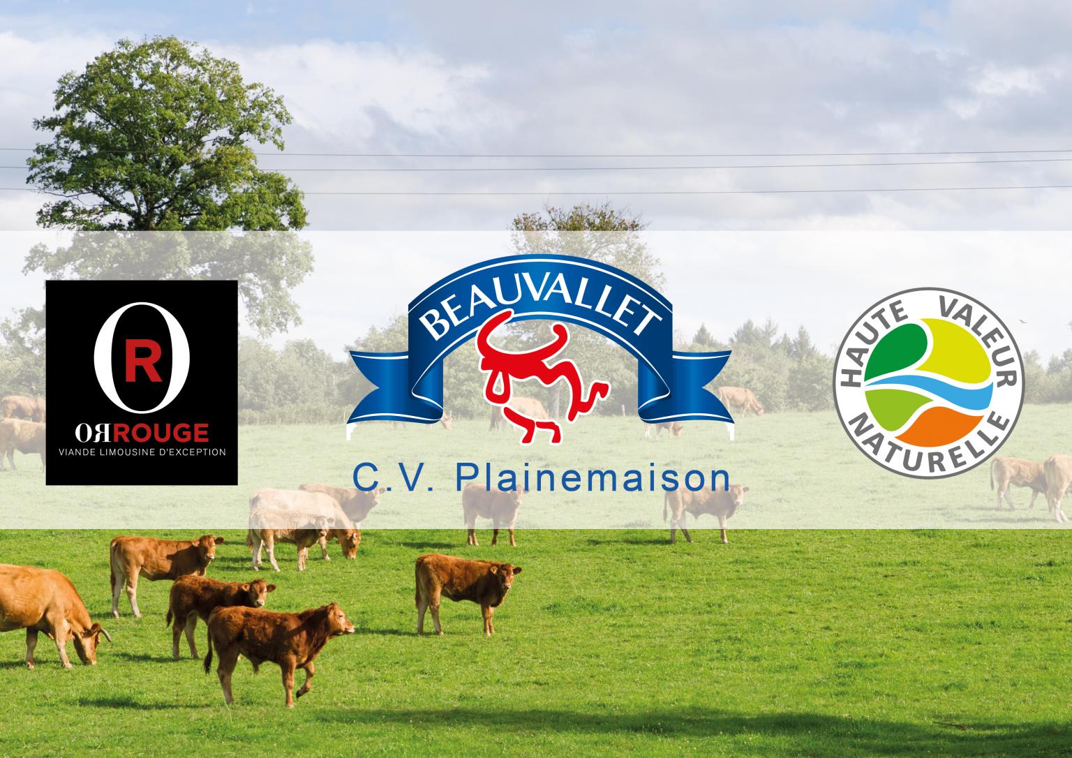 CV Plainemaison, modèle national de structuration de la filière bovine pendant 3 ans